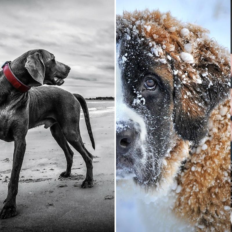 Top 10 chien de garde 2019