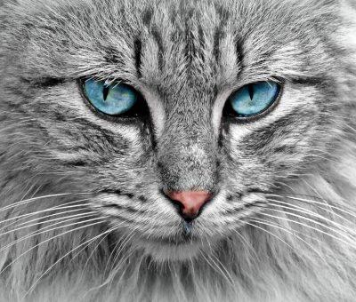 le -chat- le- plus -cher -du- monde
