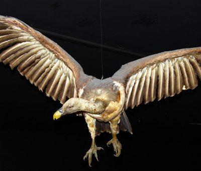 albatros oiseau