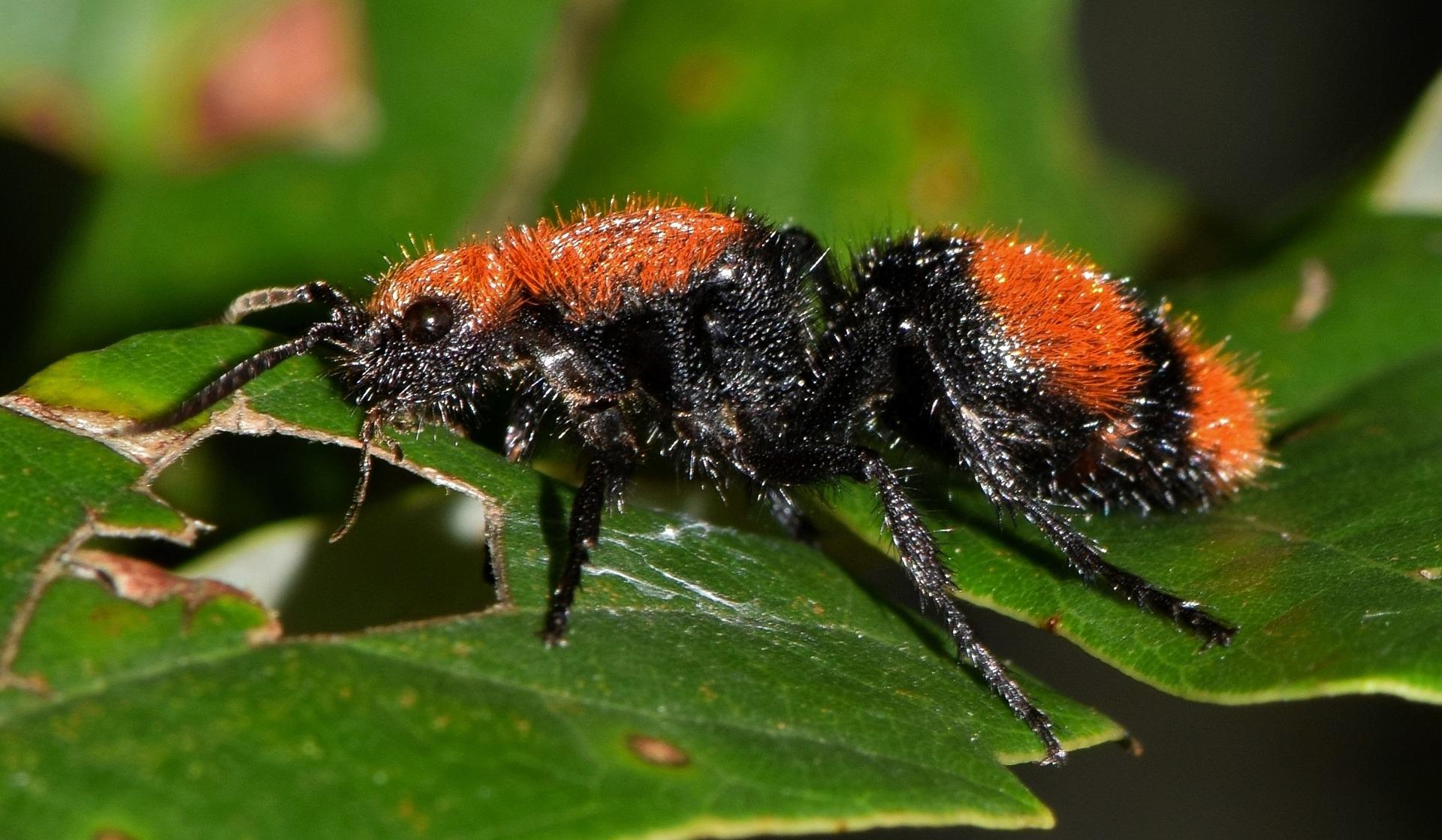 expérience scientifique les insectes tueurs