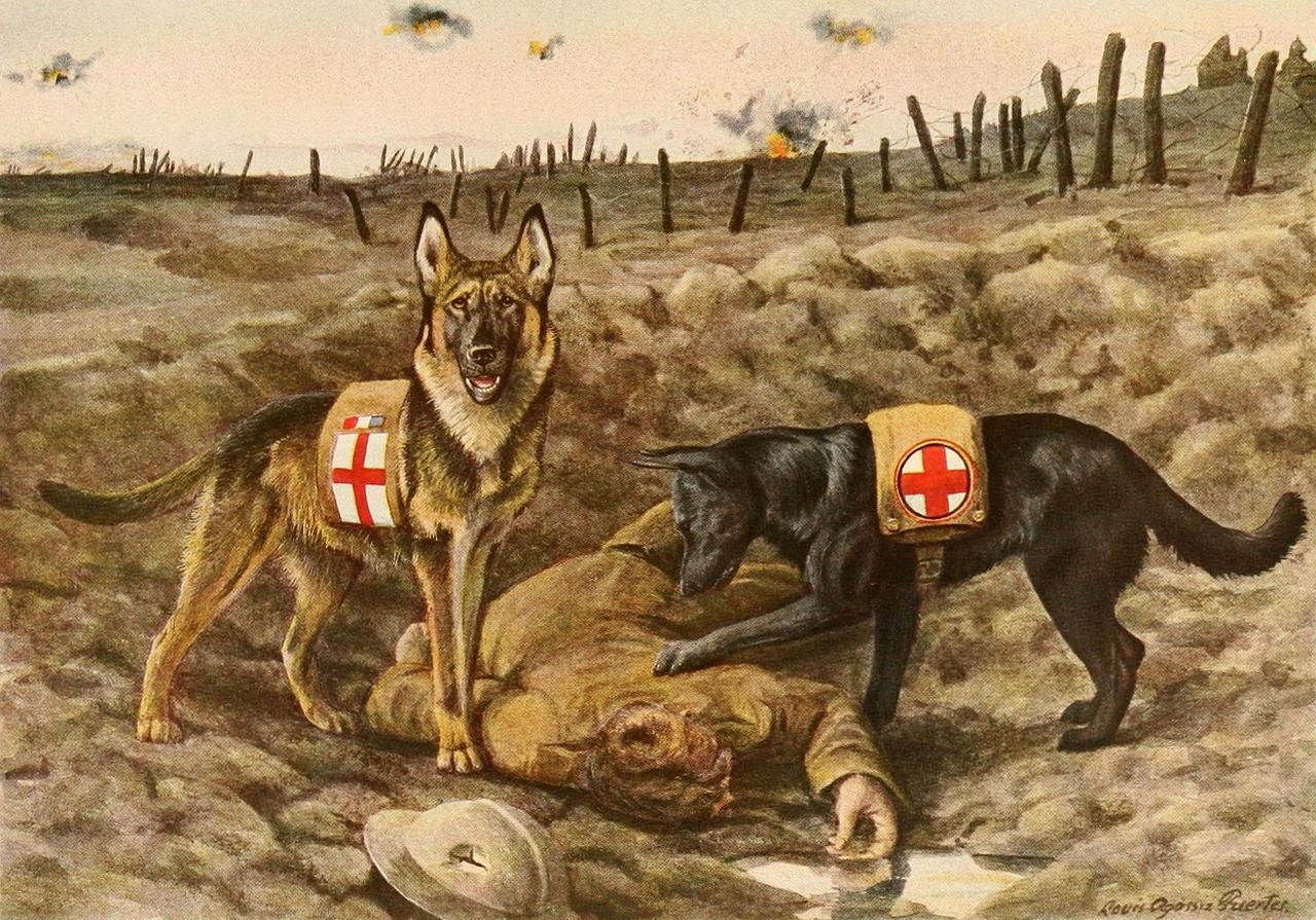 Animaux de guerre : le chien
