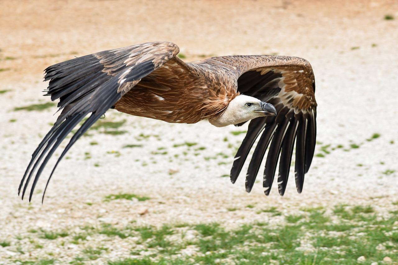 plus grands oiseaux du monde